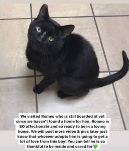 adopt me black cat in NJ